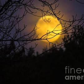 Mim White - Full Beaver Moon