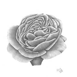Patricia Hiltz - Full Bloom