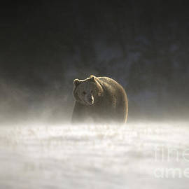 Wildlife Fine Art -  Blizzard Bear