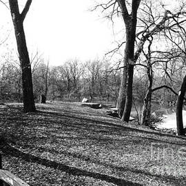 ImagesAsArt Photos And Graphics - Fullersburg Woods Landscape In Black And White