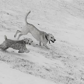 Jayne Gohr - Fun In The Snow
