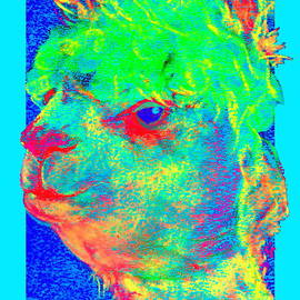Sue Jacobi - Funky Alpaca Baby