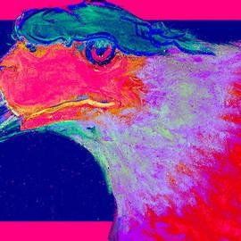 Sue Jacobi - Funky Caracara Bird of Prey Art Prints