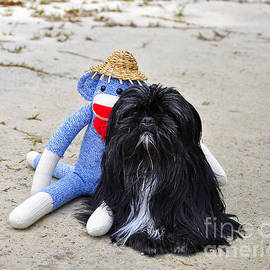 Al Powell Photography USA - Funky Monkey and Sweet Shih Tzu