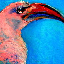 Sue Jacobi - Funky Red-billed Hornbill Art Print