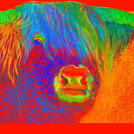Sue Jacobi - Funky Scottish Highland Cow Wildlife Art Prints