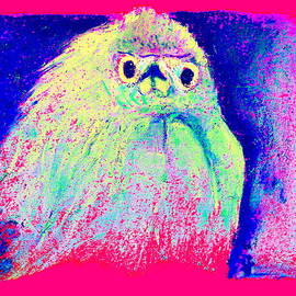 Sue Jacobi - Funky Snowy Egret Bird Art Prints
