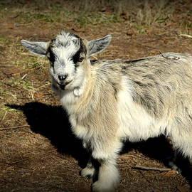 Kathy Barney - Fuzzy Wuzzy Goat