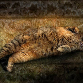 Susan Schwarting - Gabby the Tabby