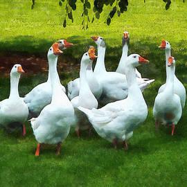 Susan Savad - Gaggle of Geese