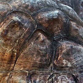 Miroslava Jurcik - Galapagos Tortoise shell