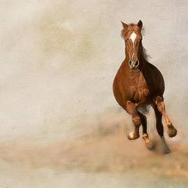 Peggy Blackwell - Galloping Horse