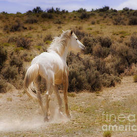 Jerry Cowart - Galloping White Stallion Wild Horse On Navajo Indian Reservation