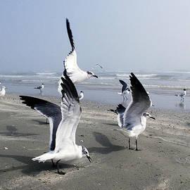 Shere Crossman - Galveston Gulls