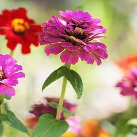 Paul Sturdivant - Garden Beauties