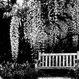 Zina Zinchik - Garden bench  by Zina Zinchik