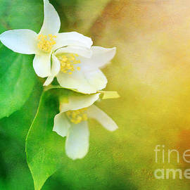 Reflective Moments  Photography and Digital Art Images - Garden Bliss