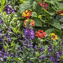 John Straton - Garden Color at Woodward Park 20f