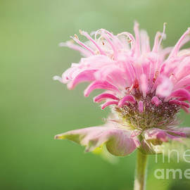 Reflective Moment Photography And Digital Art Images - Garden Jester