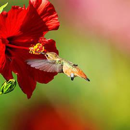 Lynn Bauer - Garden Jewel - Fine Art by Lynn Bauer