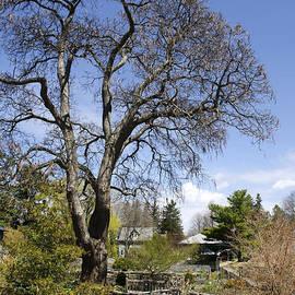 Christina Rollo - Garden Path Landscape