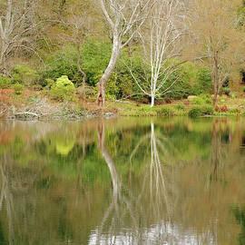 Marilyn Wilson - Garden Reflection