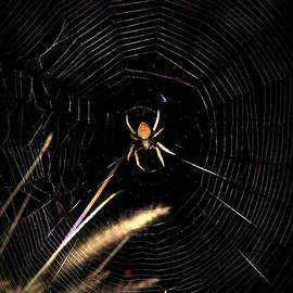 Joseph G Holland - Garden Spider