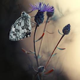 Jaroslaw Blaminsky - Garden Stories XII