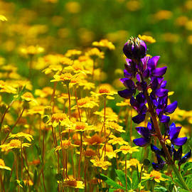 Lynn Bauer - Garden Wildflowers