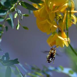 Renee Barnes - Gathering Nectar