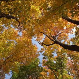 James Peterson - Gazing into Autumn Skies