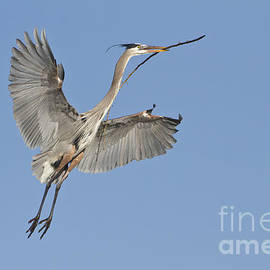 Bryan Keil - GBH with nesting material