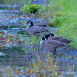 Christie Morgans - Geese in the Reeds