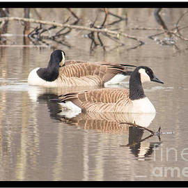 Victoria  Dauphinee - Geese Reflections