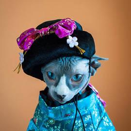 Zina Zinchik - Geisha Cat
