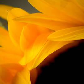 Cari Madsen - Sunflower