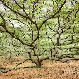 Dan Carmichael - Gentle Thoughts - A Tranquil Moments Landscape