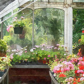 Susan Savad - Geraniums in Greenhouse