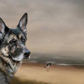Jai Johnson - German Shepherd Dreaming Of The Beach