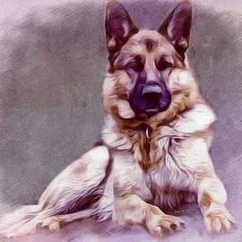 Scott Wallace - German Shepherd Portrait