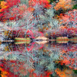 Dianne Cowen - Ghostly Fall Colors- Reflections