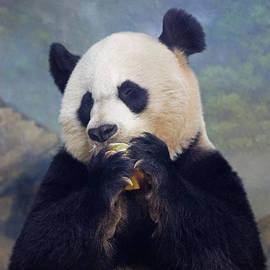 Jack Nevitt - Giant Panda Eating