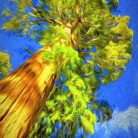 Peter Hogg - Giant Sequoia