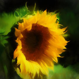 Douglas MooreZart - Giant Sunflower