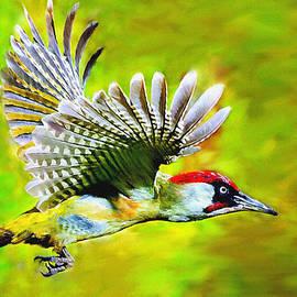 Bob and Nadine Johnston - Gila Woodpecker
