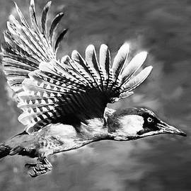Bob and Nadine Johnston - Gila Woodpecker Sedona Arizona