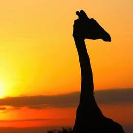 Amanda Stadther - Giraffe at Dawn