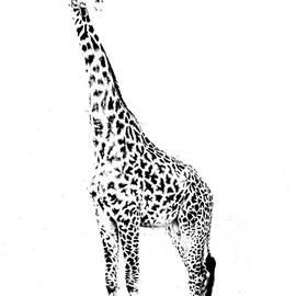 Aidan Moran - Giraffe - Masai Mara - Kenya