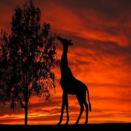 David Dehner - Giraffe Sunset Silhouette Series