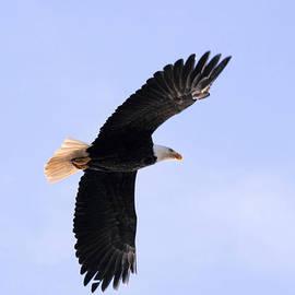 Kym Backland - Giving Me The Eagle Eye?